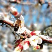Pelo Caule da Memória: dos usos e costumes das árvores e plantas do Côa
