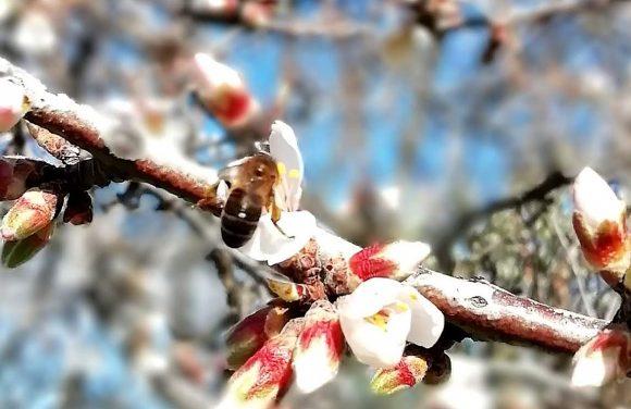 Pelo Caule da Memória: dos usos e costumes das árvores e plantas do Côa.